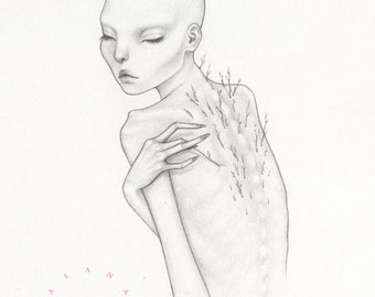 "Original Graphite Drawing ""Pluck"""