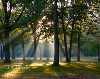 Sunshine Through Trees, Ethereal Light, Light Rays Photo, Streaming Light, Photo Print, Sunshine in Forest, Wall Art, Rustic Decor, Woodland