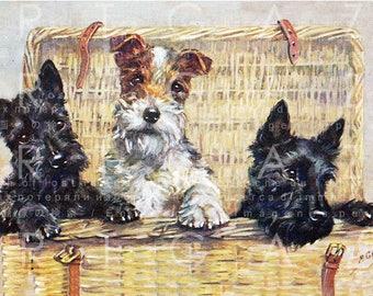 A BASKET Of MISCHIEF! Cute Dog Art Scottish & Fox Terriers Puppies. Vintage Dog Illustration. Digital Dog Download.