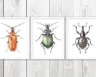 Beetle Art Set Of 3 - PRINTABLE Watercolor Beetle Painting, Colorful Beetle, Insect Art, Beetle Print, Instant Download ACC232