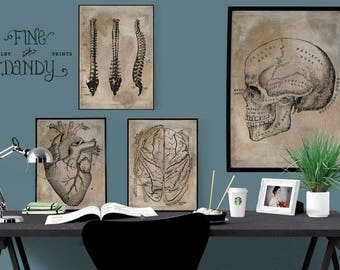 SET: Doctor Office Art, Anatomical Heart Print, Vintage Medical Illustrations, Skull Poster, Spine Illustration,Anatomical Brain,Medical Art
