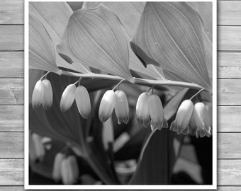 White Bells Flower, Square Prints, White Flowers, Giclee Print, Close up, Macro Flowers, Black and White Photography, Bw Photo Print, Prints