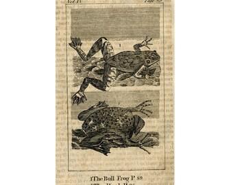 1808 FROGS FROG print original antique amphibian engraving