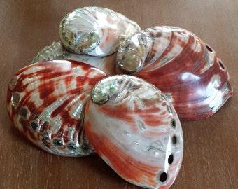 Abalone Shell, Sea Shell, Shells, Beach Decor, Nautical Decor, Coastal Decor, Beach House Decor, Beach Home, Polished Red Abalone Shell