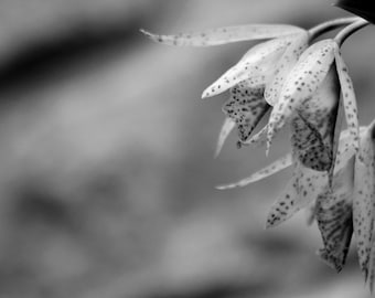 Black and white spotted flower, photography prints, decor, gift, art