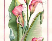 """Notecard """"Calla Lily"""" by Sandi McGuire"""