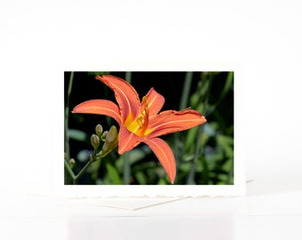 Flower Photography, Common Orange Daylily Blank Photo Greeting Cards, Lily Flower, Summer Flowers, Nature Photography