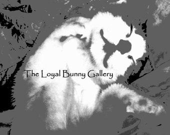 "50 Shades of Grey Kitten Fine Art Print Giclee 5""x7"" or 8""x10"""