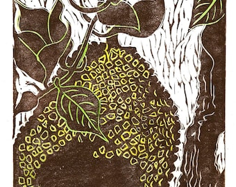 Jackfruit, limited edition linoleum block print, printed and signed in pencil by the artist