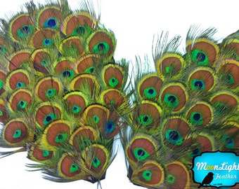 Feather pads, 1 Piece - Natural Peacock Tiny Eyes Feather Pad : 2298