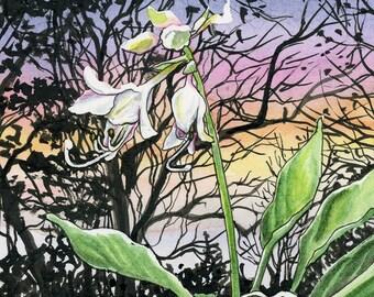 Vista de la Hosta - 8x8 Original Watercolor