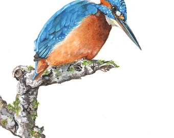 Kingfisher painting  bird watercolor painting -  Print of watercolor painting - 5 by 7 print, K2014, Kingfisher watercolor painting