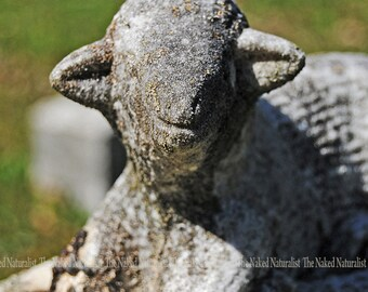 A Lamb On A Cemetery Headstone, Gravestone, Oddity, Memorial, Fine Art, Gray, Green, Grey, Somber