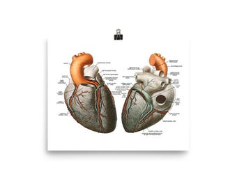 Anatomy of the Heart Poster