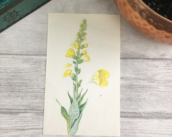 Common Mullein print desk accessories tiny house art boss gift nursery prints kitchen wall decor garden art self care kit aunt gift