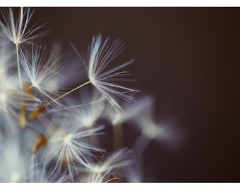 Nature Photography  - Dandelion Print - Wake Me A Song -  Fine Art Photograph - Floral Art - Oversized Art - Alicia Bock - Botancial Print