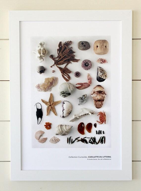 "Naturalist poster  SEASHORE HARVEST - 13"" x 19"""