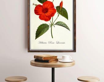 Botanical Illustration, Botanical Painting, Antique Botanical Print, Plant Illustration, Botanical Art Poster, Flower Illustration, Wall Art