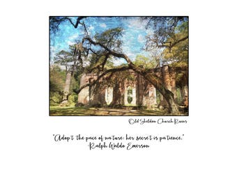 The Trees of Sheldon Church