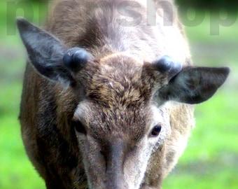 Look! Deer! -Photography Photo card 10 x 15 cm Inkjetprint