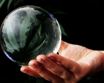 Cannabis Crystal Ball - Nature Fine Art Photography