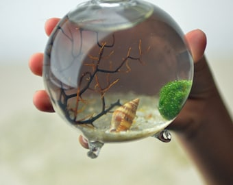Marimo Terrarium - Japanese Moss Ball Aquarium - footed bud vase -  with sea fan - shells - and sand