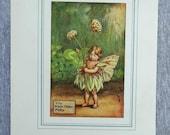 White Clover Flower Fairy...