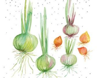 Pastel onion garden vegetables illustration, Onion art, Watercolor vegetable, Veggie watercolor art, Vegetable art, Kitchen decor, Art gift