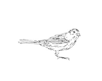 Bird Art Print - Line Drawing, Songbird, Sparrow, Giclee Print, Pen, Ink