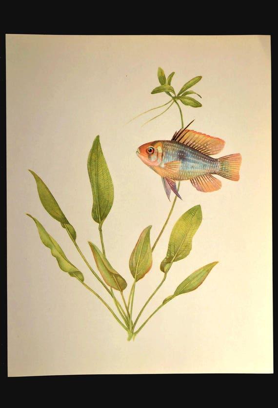 Tropical Fish Print Aquarium Fish Wall Art Decor Aquatic Plant