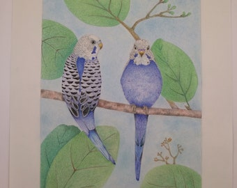 Two Parakeets - original artwork colored pencils
