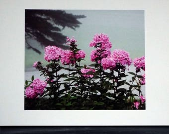 PINK SUMMER PHLOX Photo Print, High Quality Print with Free Shipping, Pink, Fragrant Flowers, New England Garden Favorite