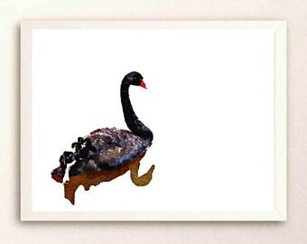 Black swan on a lake