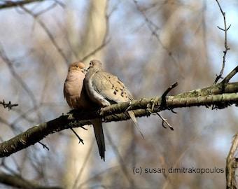 Vogelliebhaber, Courtin' im Mai, Wand, Kunst, Fine Art Foto, Haus Hütte Dekor, Trauer Tauben, Natur, Tierwelt, Geschenk 20