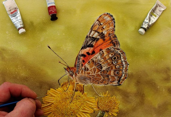 Painted Lady Watercolour Painting