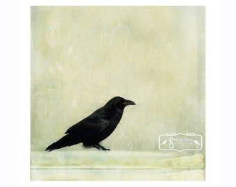 A Raven Fine Art Print