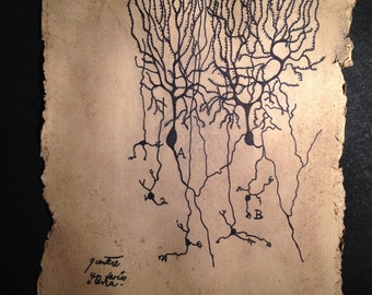 Hand Drawn - Cajal's Purkinje Neurons - Biology Student Gift - Neuroscience Illustration - Sketch of Nerve Cell - Science Art - Cajal Neuron