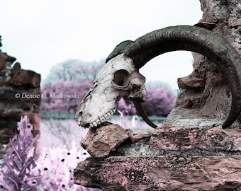 The Passage of Time ~ Still Life Skull Photograph ~ Fine Art Photography ~ Gothic Decor ~ Taxidermy Art