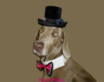 Cat - Dog - Top Hat - The Aristocrat black top hat for dogs and cats