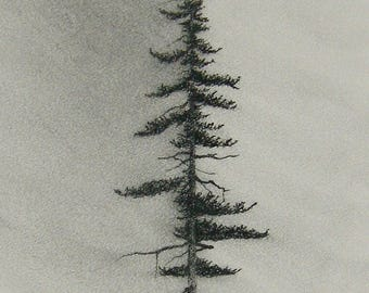 Charcoal Pine CHARCOAL drawing PRINT