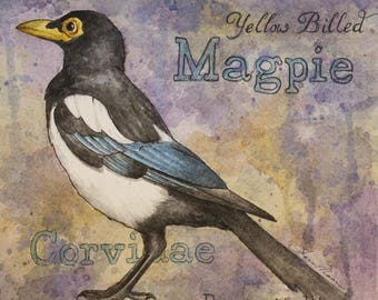 Magpie Watercolor Print
