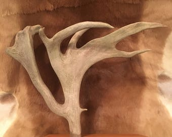 Caribou Antler Jewelry Display