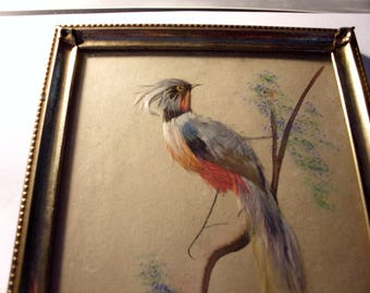 Vintage Mexican Art Feathercraft Picture of Steller Jay on the Branch in a Gold Tone Metal Frame Under Glass