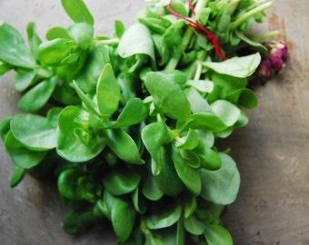 Portulaca Olerecea Organic herb seeds 3gr 2600-2700 seeds