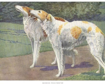 1919 Print RUSSIAN WOLFHOUND by Louis Agassiz Fuertes