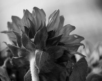 Red Sunflower 2