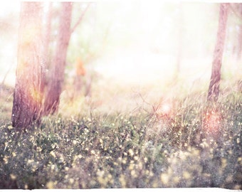 """Fairy Tale Woodland Photo """"Baby Birch"""" Ethereal Forest - Fine Art Photograph Print - Light Whimsical Photography"""
