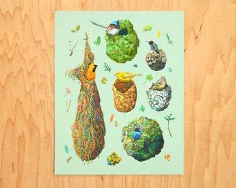 Small Bird Chart