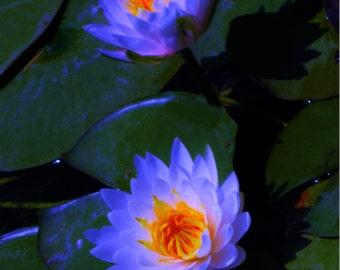 Lily Print Wall Art, Photography Print, Flower Print