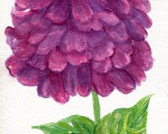 Original lila Zinnie Aquarell Malerei 5 von 7, Aquarell Blumen